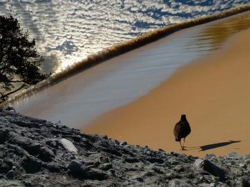 Ebb Tide (Photography, Photoshop)